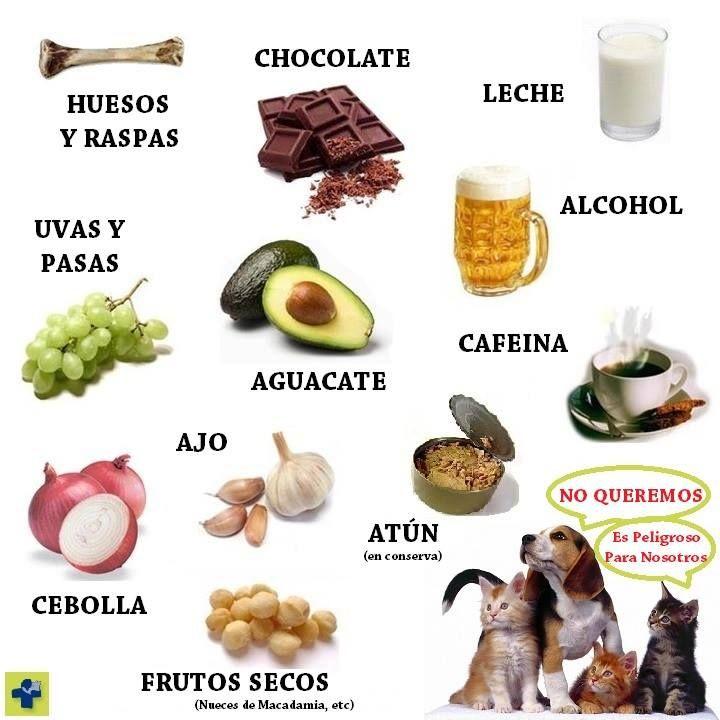 Alimentos Tóxicos para gatos y perros Infografía - Veteralia - Veterinario
