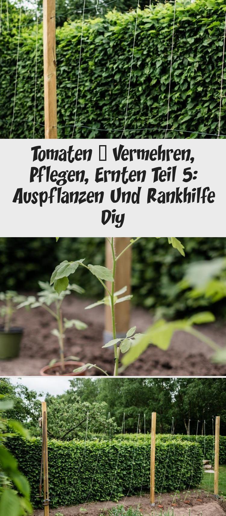 Die Wichtigsten Tipps Und Tricks Beim Auspflanzen Der Tomatenpflanzen Die Passende Tomaten Rankhilfe Selber Bauen Tomaten Teil5 Tom In 2020 Garten Outdoor Giessen