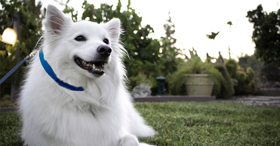 What Are the Cutest Dog Breeds? Cute dogs breeds, Dog