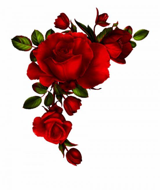 12 Flores Rojas Png Tatuajes De Rosas Rojas Flores Pintadas Fondo De Pantalla Flor Rosa