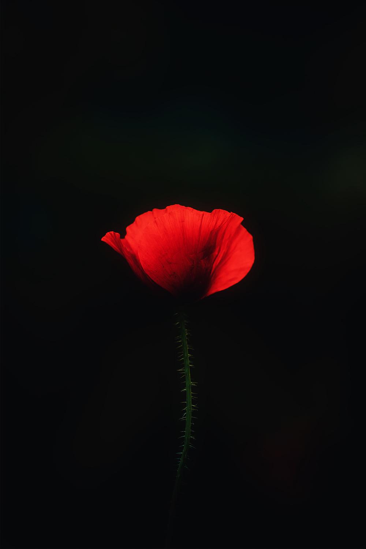 Beautiful Flowers Wallpaper HD Download in 2020