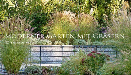 moderner garten mit gräsern am und oberhalb des pools | pflanzen