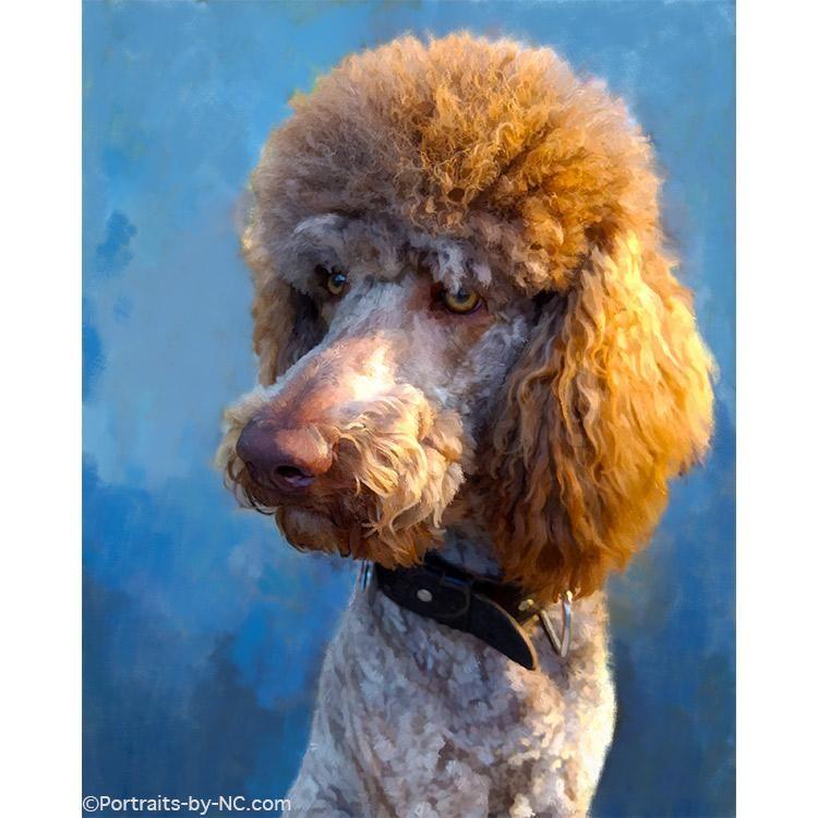 Standard Poodle Dog Portrait Poodle Dog Portraits Dogs