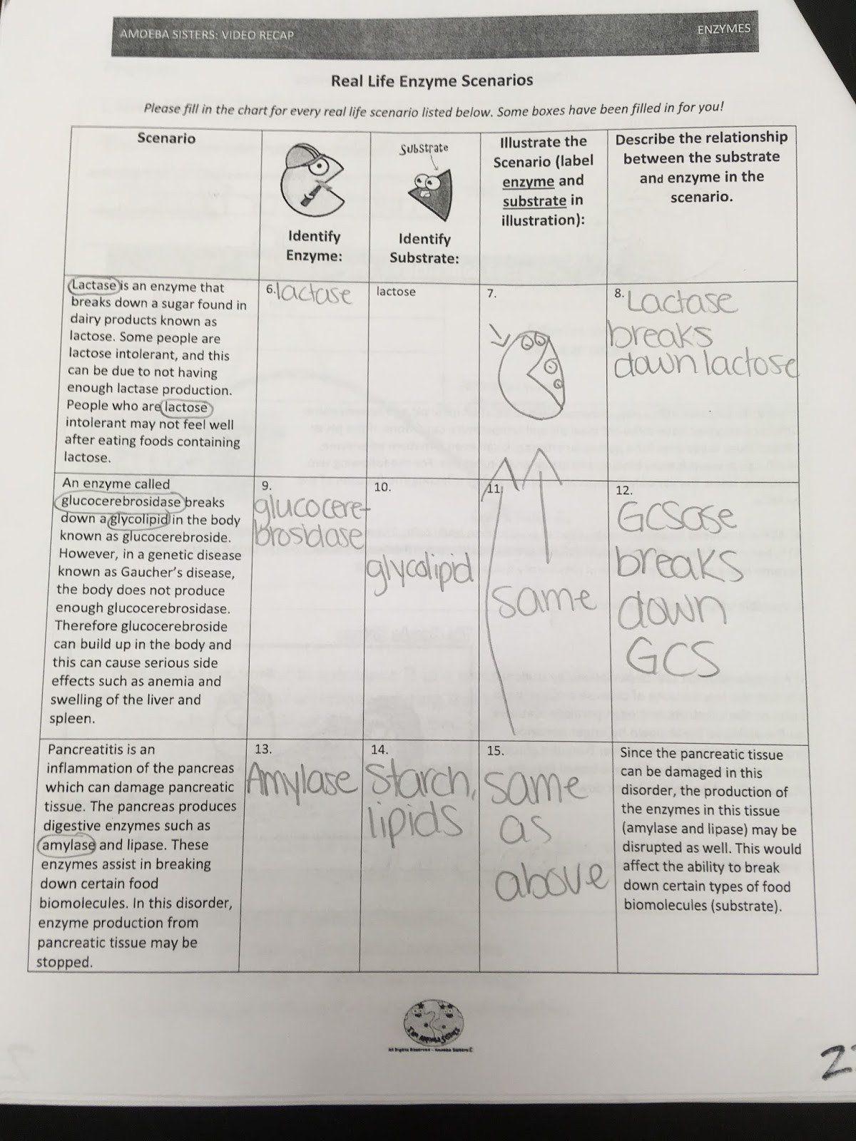Amoeba Sisters Worksheet Answers Amoeba Sisters Video Recap Answer Key Microscopes Arocrea In 2020 Kindergarten Worksheets Sight Words Worksheets Sight Word Worksheets