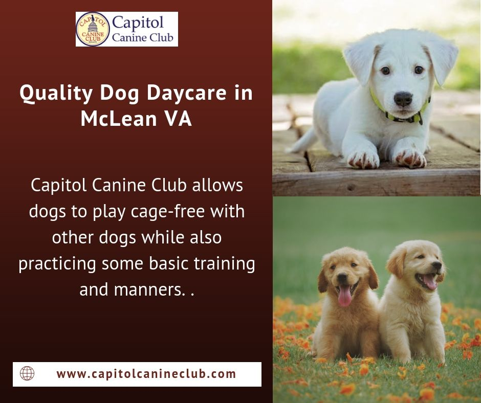 Capitol Canine Club Offers Convenient And Quality Dog Daycare In