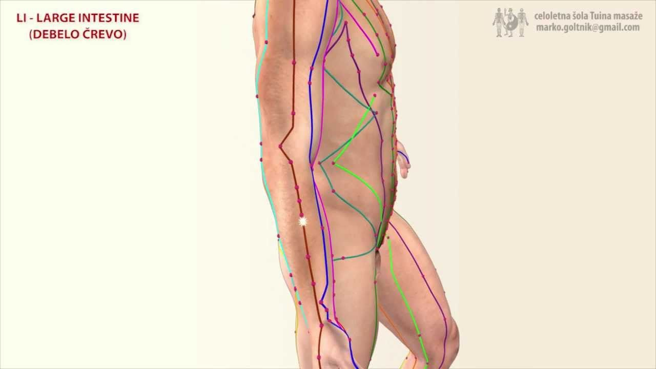The Large Intestine Meridian Massage Work Meridian Meridian