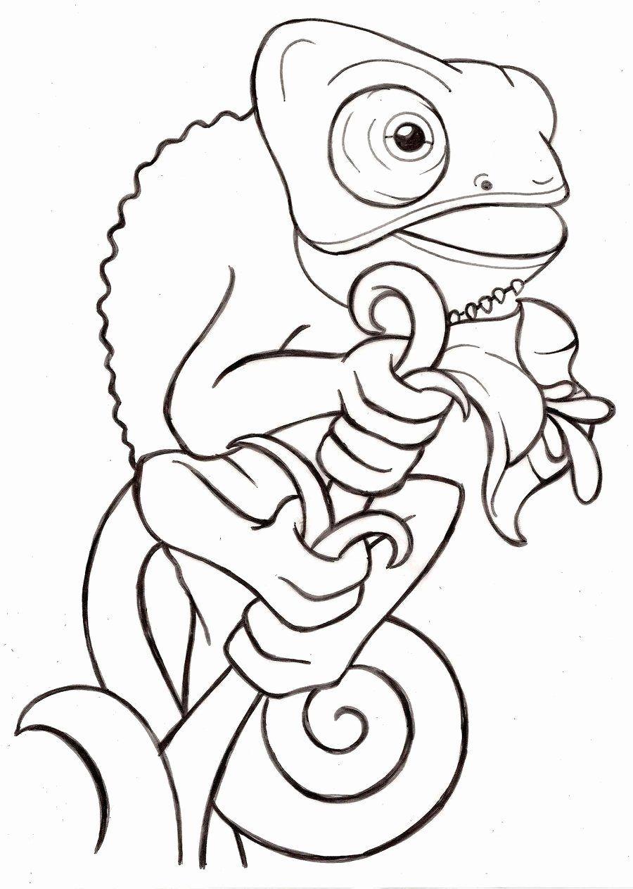 Pin Von Miley Geraldine Auf Shoebox Ideas Tiere Zeichnen Malvorlagen Tiere Chamaleon
