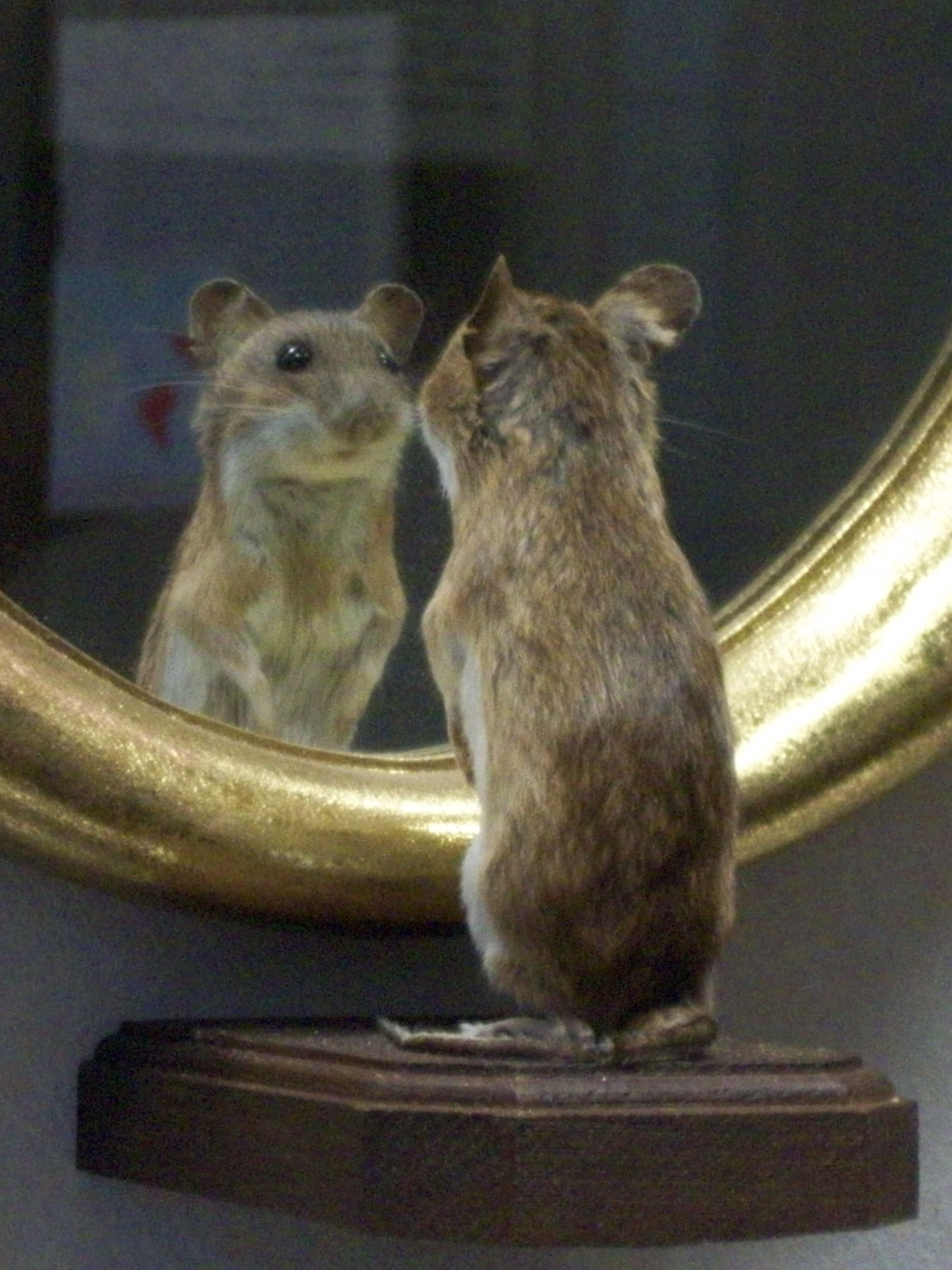 Mouse vanity.