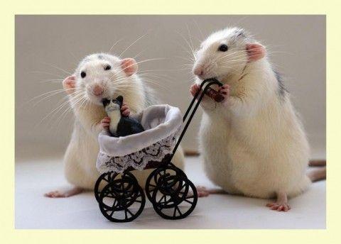 Préférence Photos de nos animaux rigolos - Nos amis les animaux - 152820  PB26