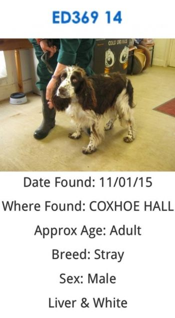 Found In Coxhoe County Durham Uk Now At Stray Aid Animal