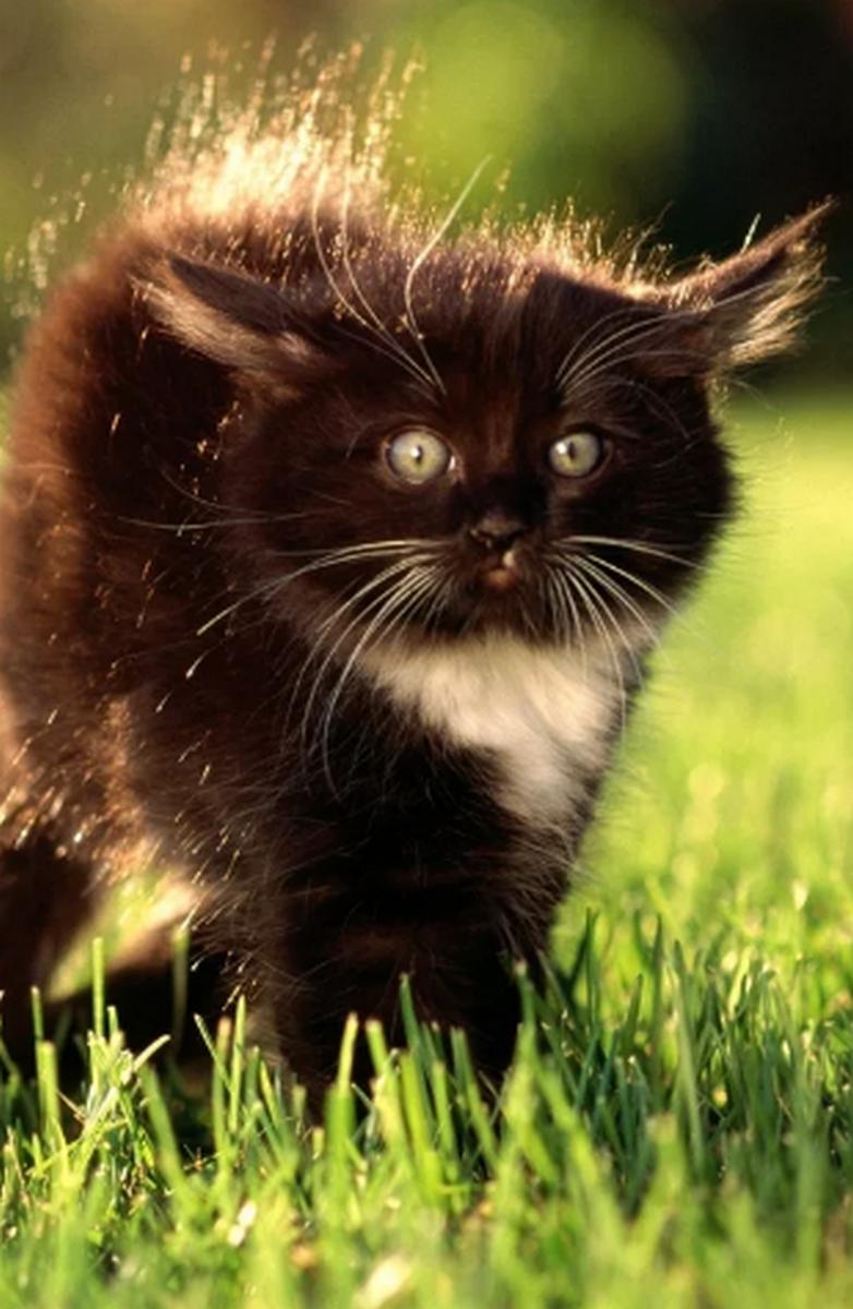 кошки картинки для мобильного непопадания олимпиаду наш