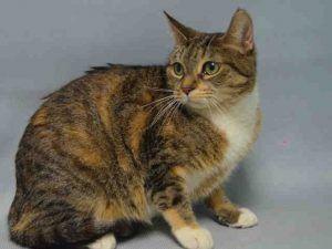 Lady A0918326 Cat Adoption Kitten Adoption Pets