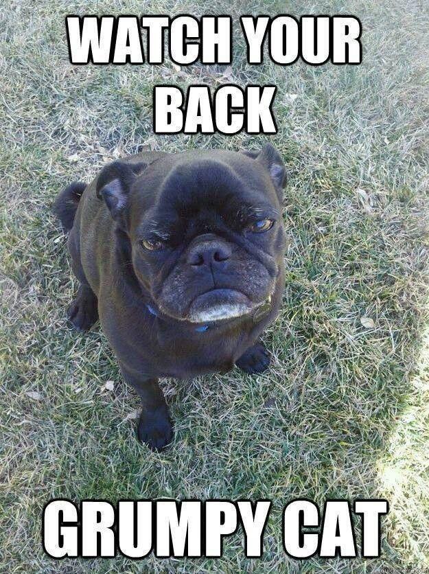 Funny Black Pug Memes
