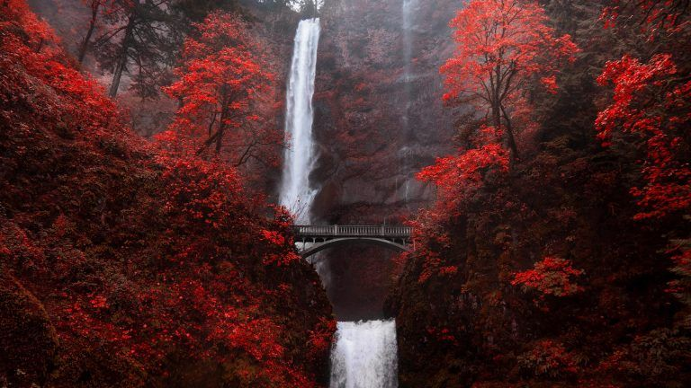 multnomah falls waterfall bridge in autumn red  portland  oregon  usa