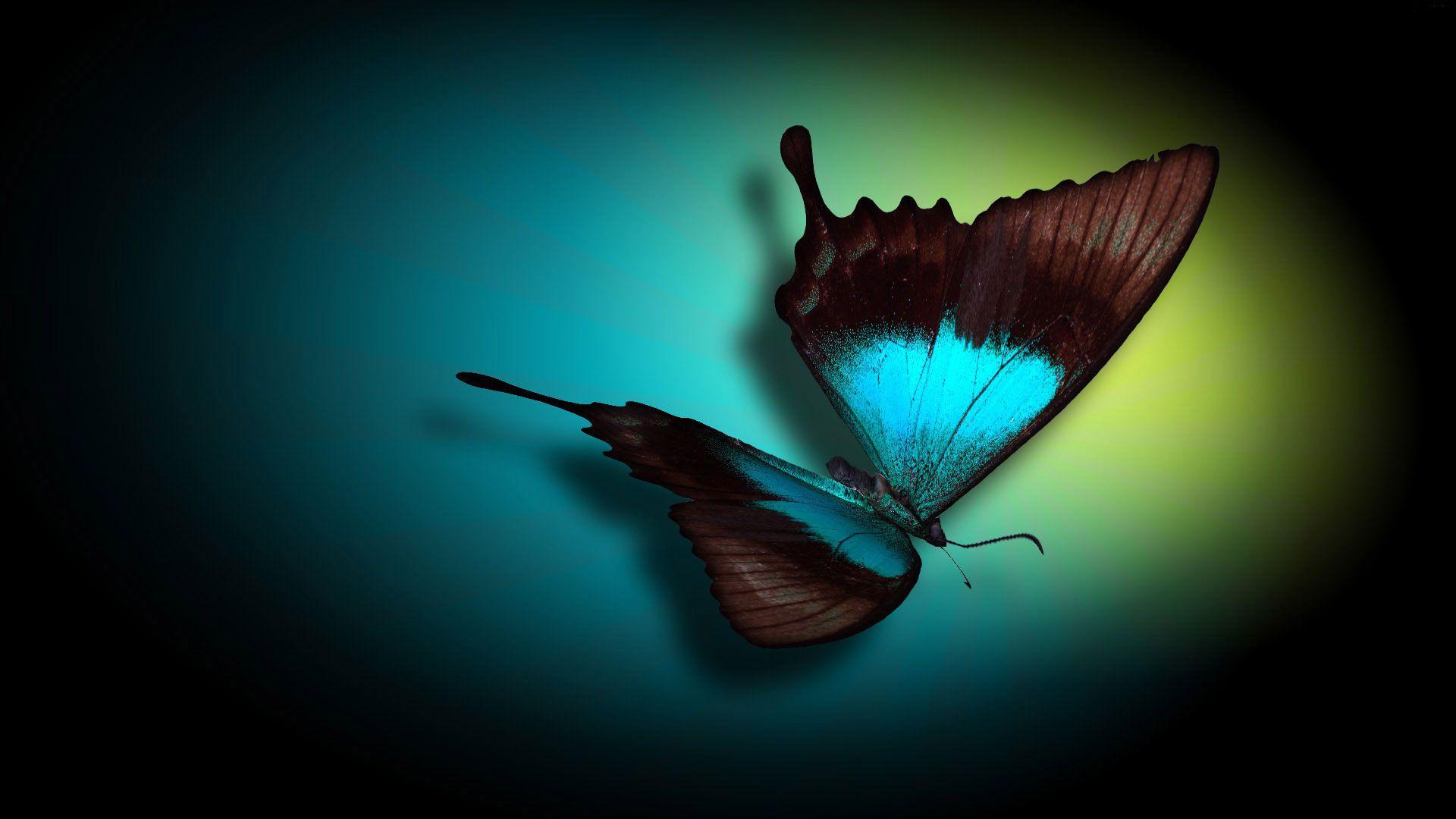 Butterfly Desktop Background 3 Butterfly Wallpaper Computer Wallpaper Butterfly Images