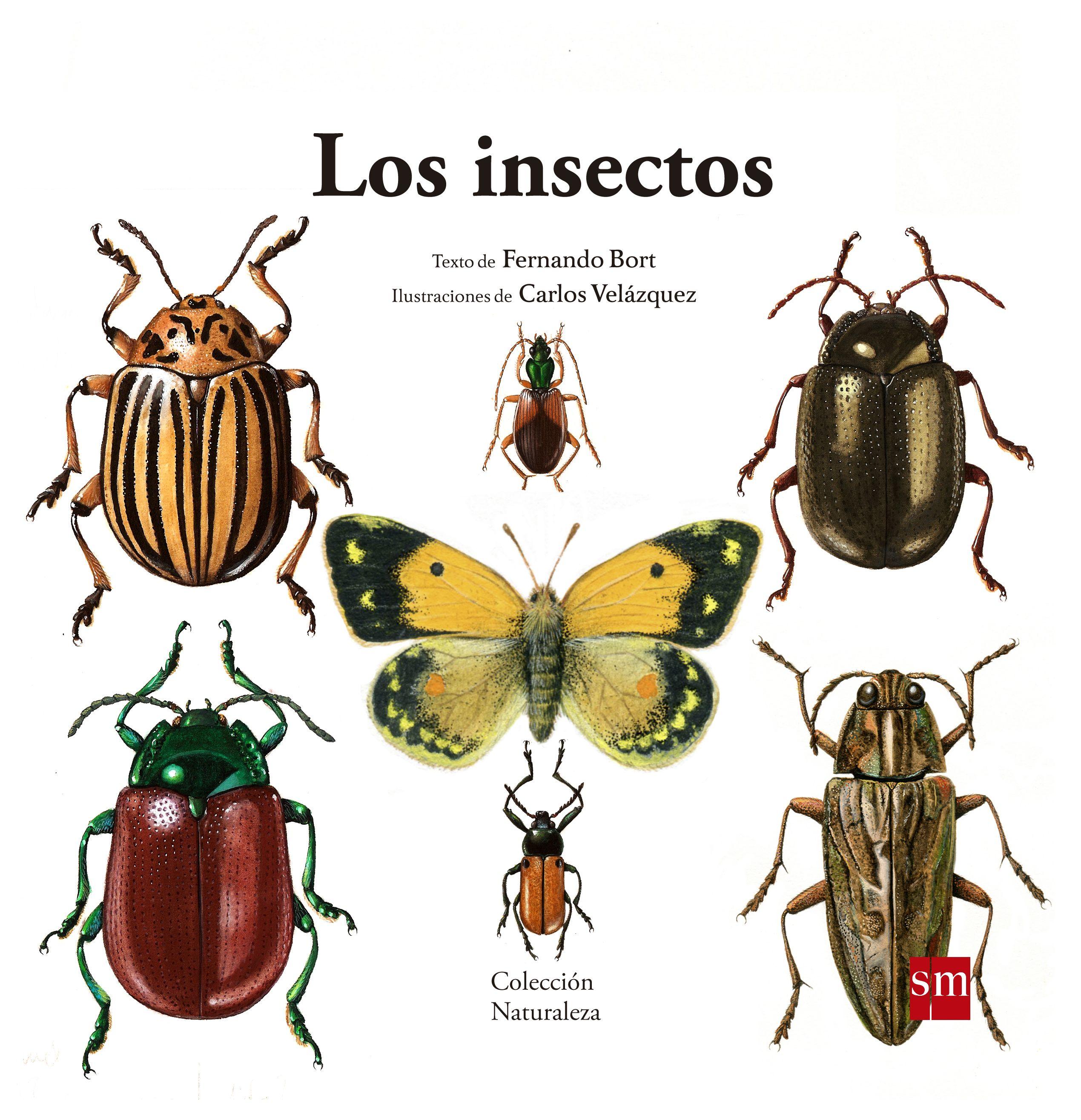 Los insectos | Insectes/insectos. Llibres infantils | Pinterest | La ...
