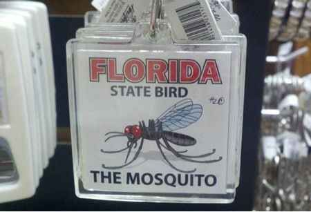 State culture: | 23 Things Everyone Who Lives In Florida Will Understand