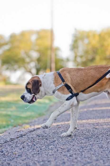 Pull Stop Dog Harness Dogs Dog Love