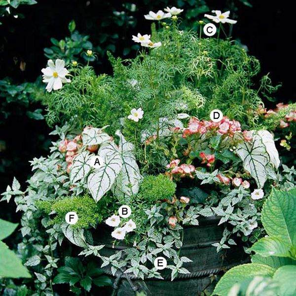 Hosta and Petunia Shade Container Garden