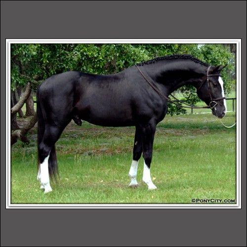 Image result for black horse white stockings