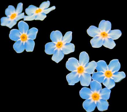 Flowers Aesthetic Png Tumblr Flower Blue Flower Wallpaper Flower Art
