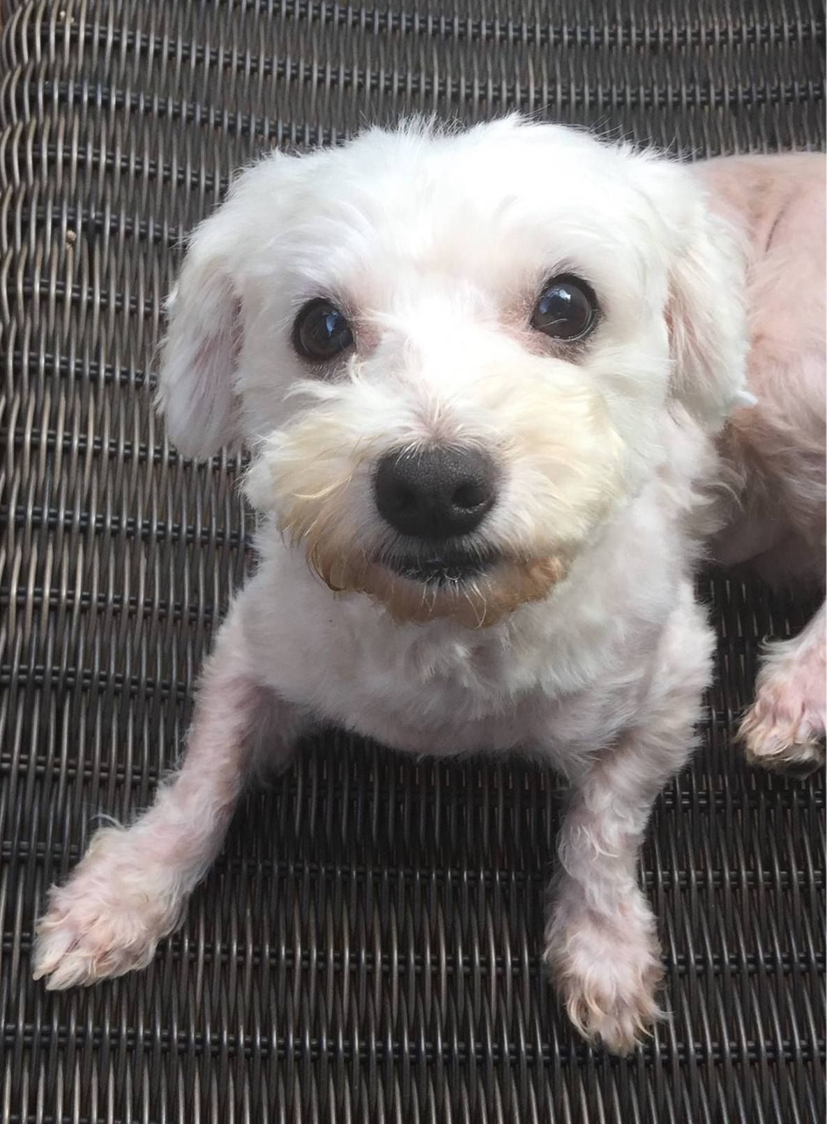 Adopt Noah On Dogs Pup Animals