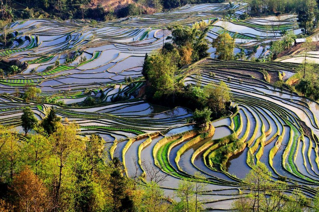 Paisaje Cultural De Los Arrozales En Terrazas De Los Hani De Honghe Situado Al Sur De La Provincia De Yunnan Es Fotos De Paisajes Paisaje Cultural Pintoresco
