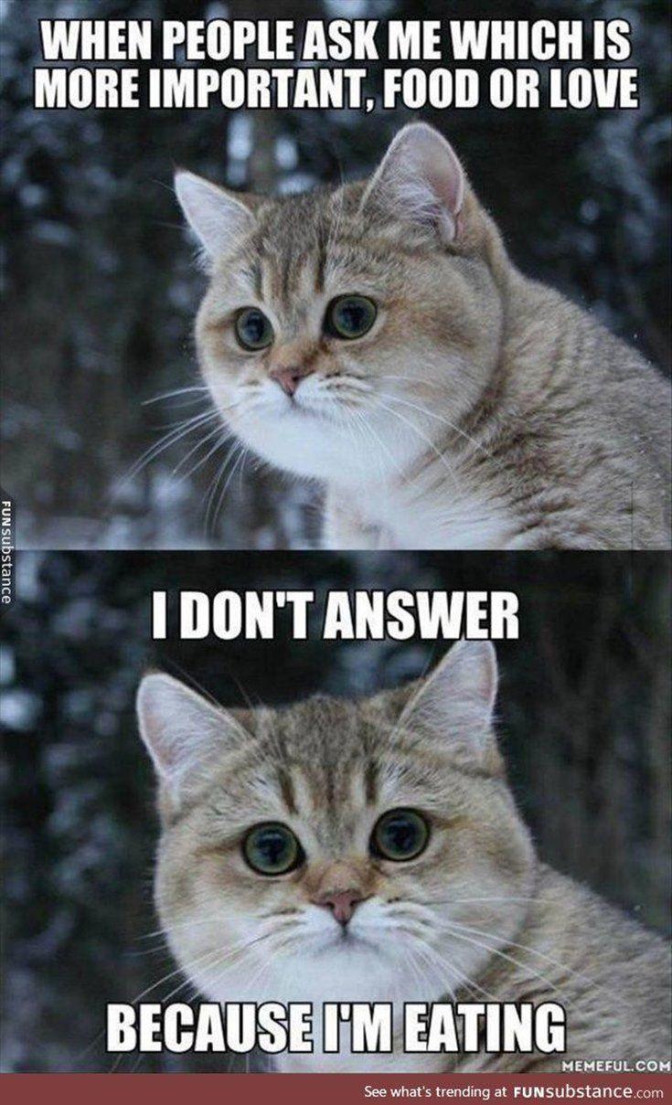 56 Hilarious Memes Guaranteed To Make You Laugh 37 Funny Animal Memes Funny Animals Funny Cat Videos