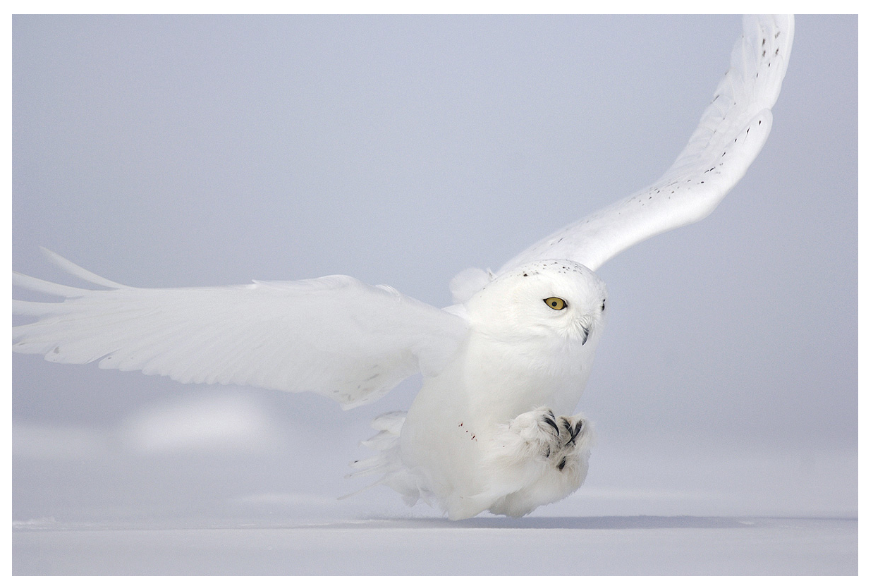 Super Vincent Munier | Wildlife photography, Wildlife and Animal LD92