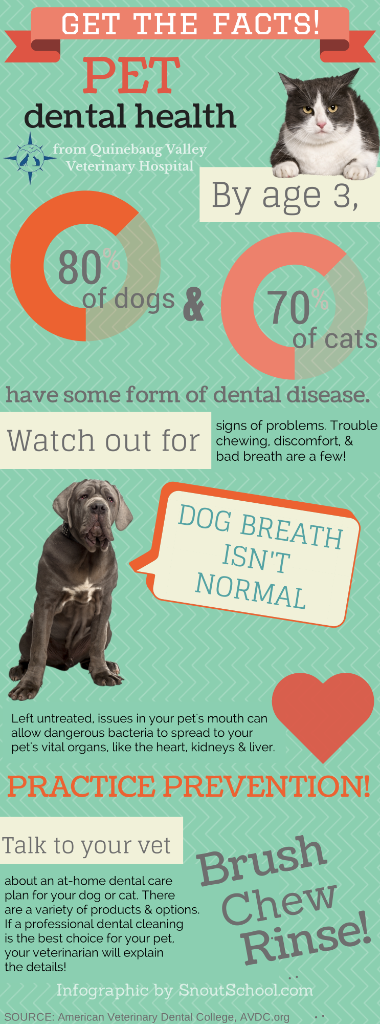 It's pet dental health month. Any veterinary or vet tech