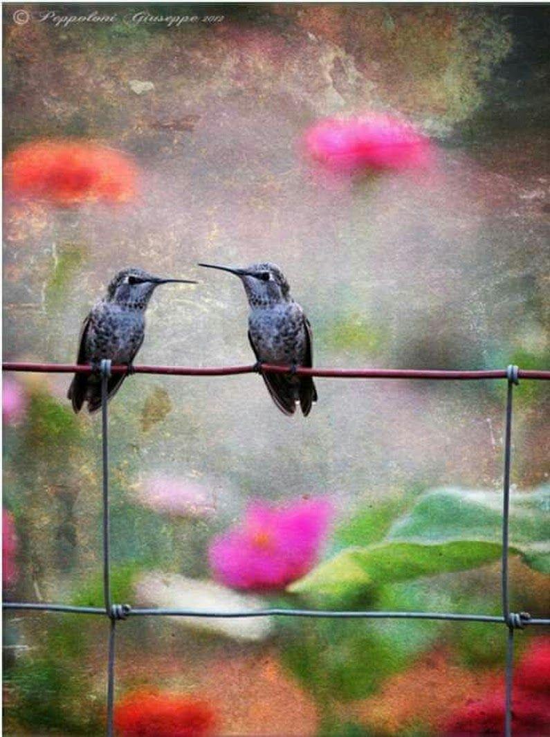 Renan Araujo Google+ Hummingbird pictures, Photo