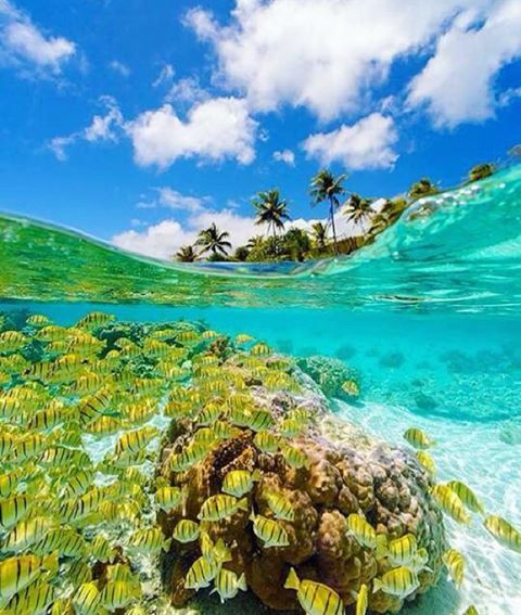 Gallery Adventure Honeymoon Destinations: Le Tahaa, French Polynesia