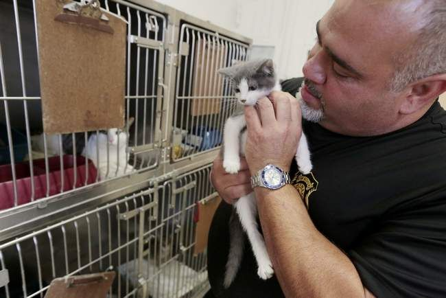 Animal advocates 'Free to good home' can lead to disaster
