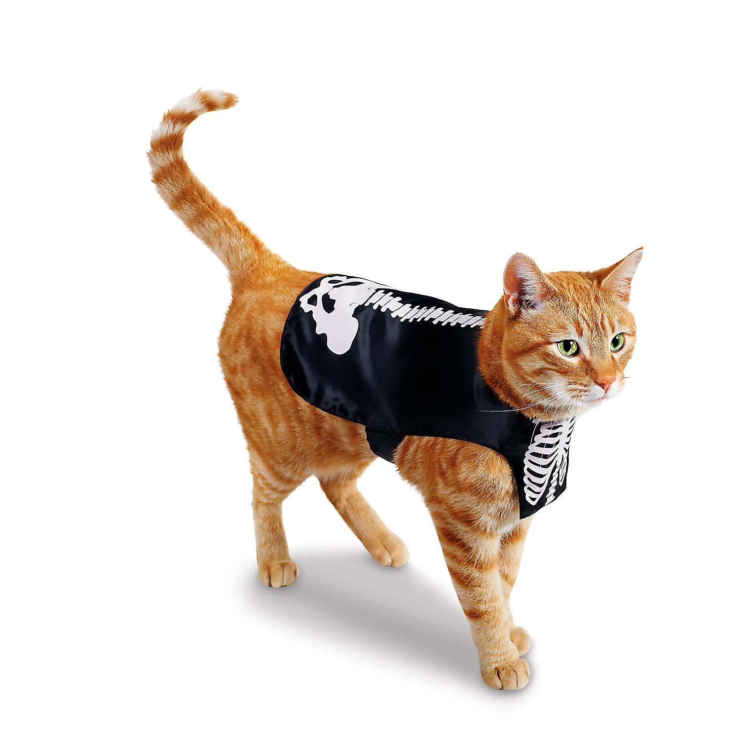Skeleton Halloween Costume for Cats This one might