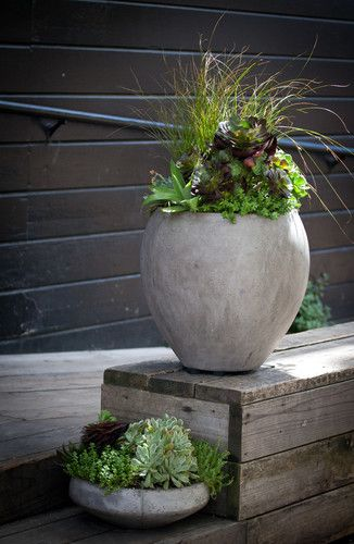 Contemporary Container Gardens Contemporary Patio With Images Potted Plants Patio Ideas Container Gardening Potted Plants Patio