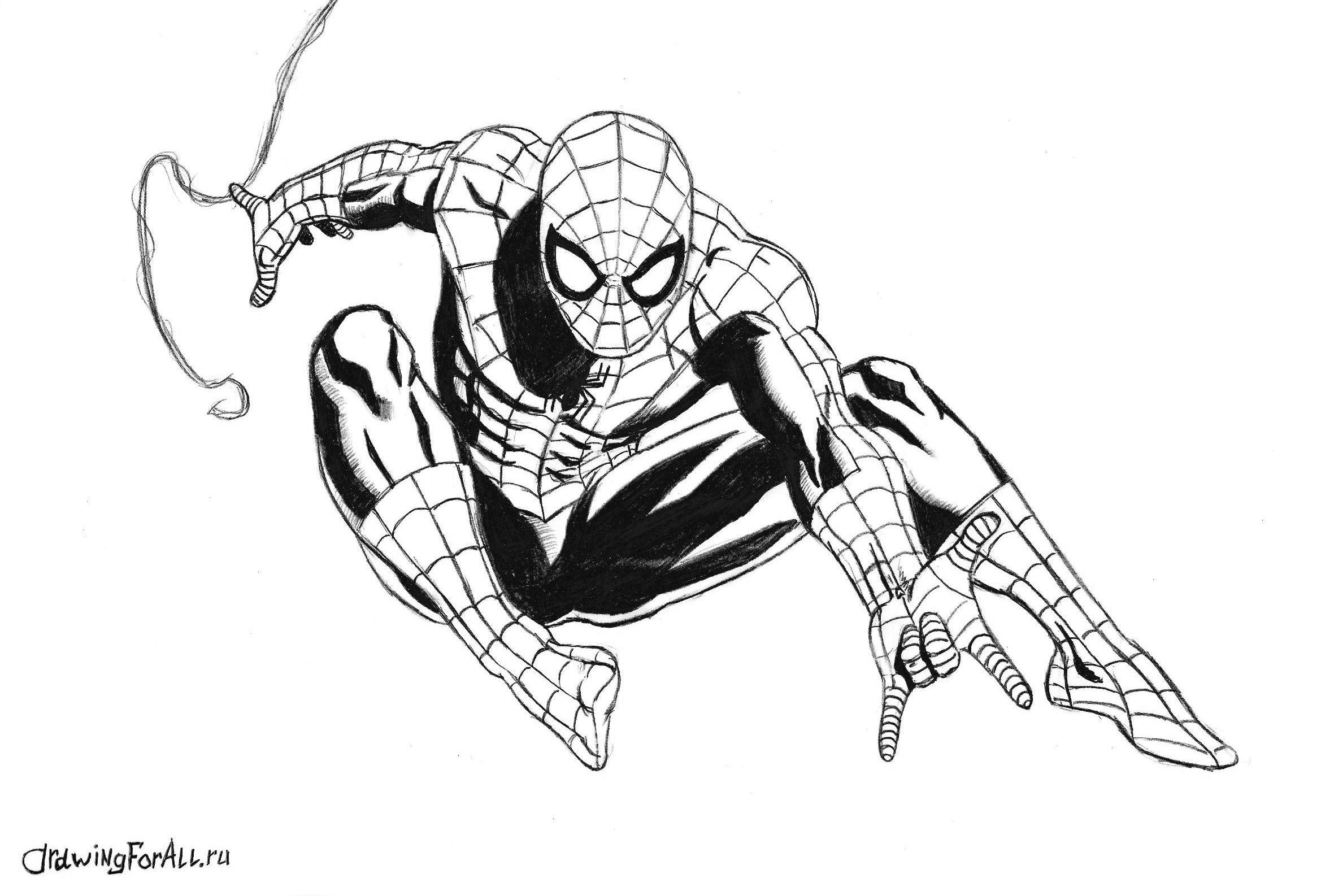 Как нарисовать картинку человека паука, заповедей