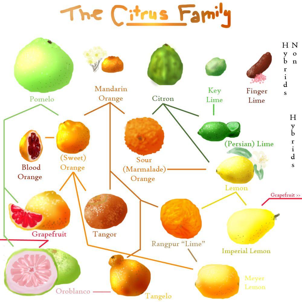 citrus | Garden Brilliance | Pinterest