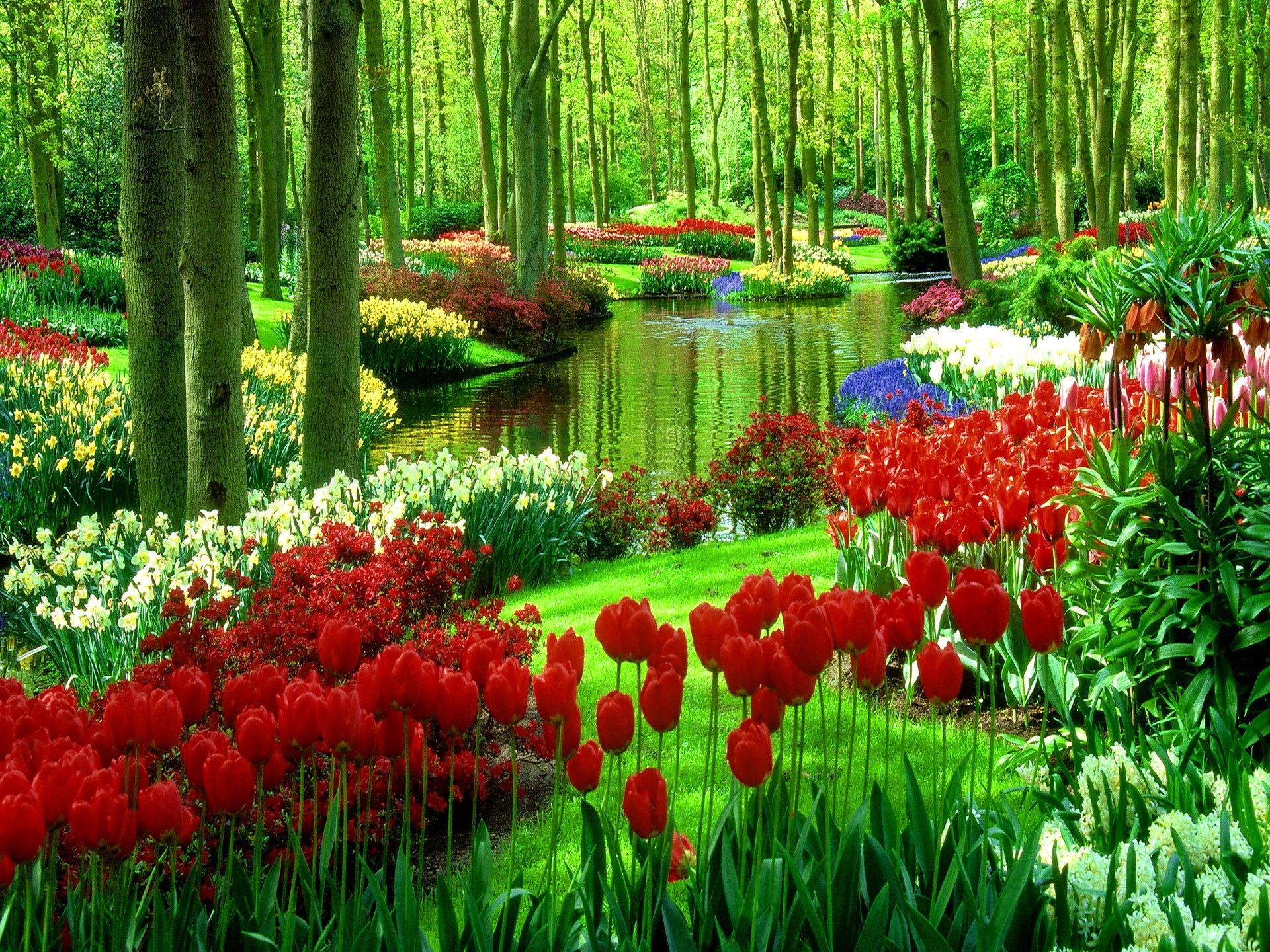 Summer Beautiful Grass Tulips Garden Nature Lovely Pretty Water Greenery Nice Trees Flowe Beautiful Flowers Garden Beautiful Gardens Beautiful Nature Wallpaper