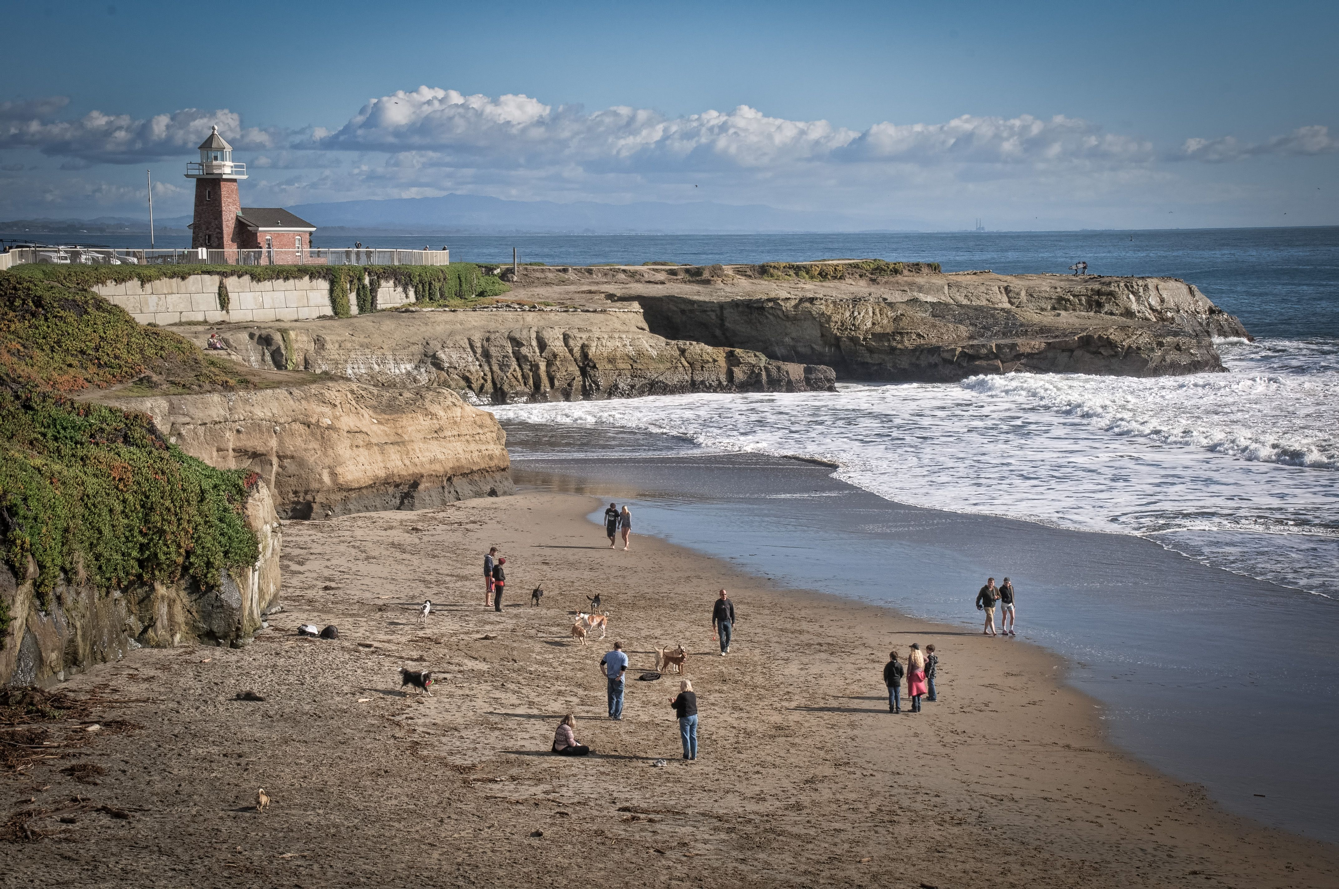 The Perfect Dog Friendly Santa Cruz Day Trip California Basin Blog
