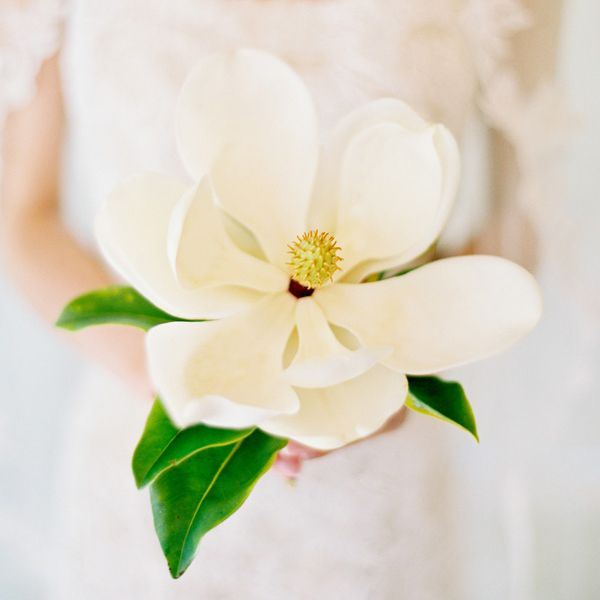 Flowers in Season July Wedding Flower and Magnolias
