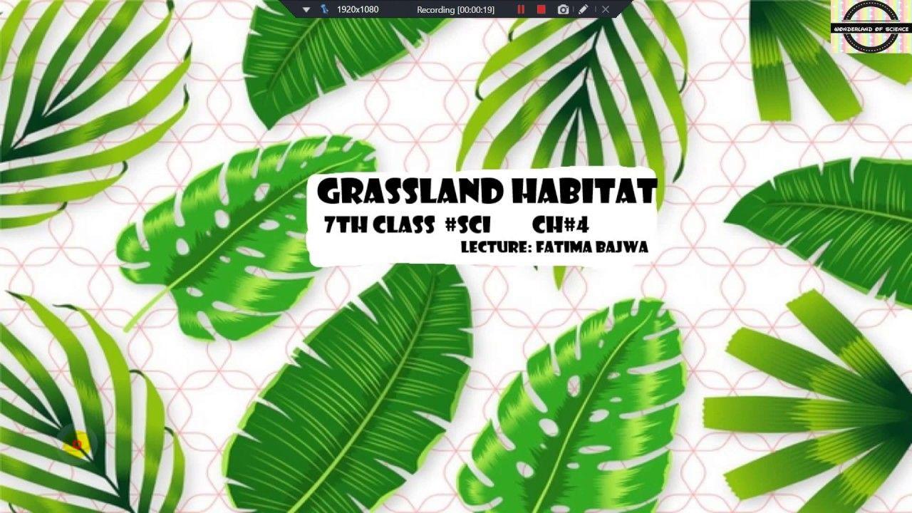 Pin on grassland habitat