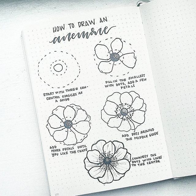How To Draw An Anemone Flower I M Taking Requests For Future Flowerfriday Tutorials Comment Bel Flower Drawing Tutorials Flower Doodles Easy Flower Drawings
