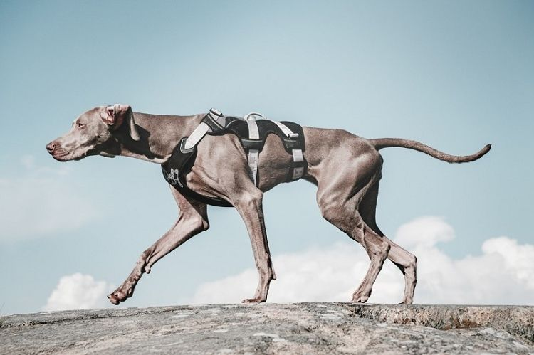 Hurtta Trail Harness For Dogs Dieren