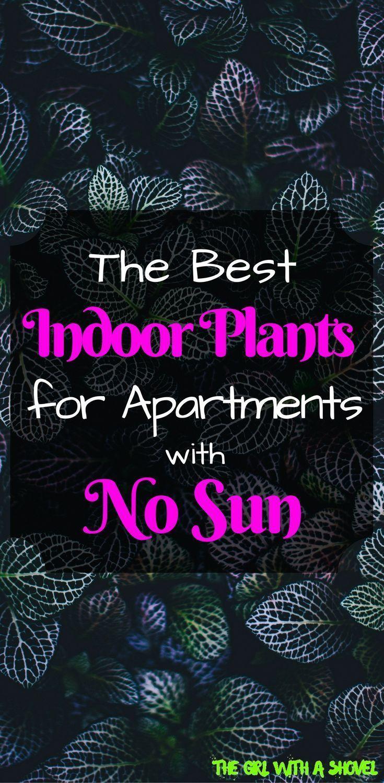 暗いアパートに最適な植物 In 2020 Indoor Plants Low Light Low Light 400 x 300