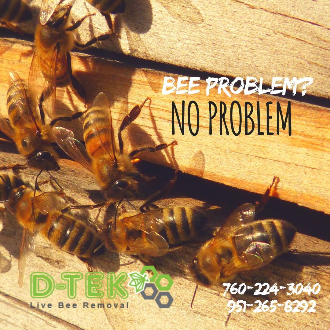 Our Trained Professionals Have Years Of Experience In Live Bee Removal And Know Firsthand How Difficult And Dangerous It Can Bee Removal Bee Hive How To Remove