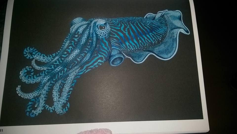 Cuttlefish by Samantha Miller