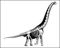 Reconstructing Dinosaurs from bones  http://naturalhistory.si.edu/exhibits/backyard-dinosaurs/reconstructing-animals.cfm