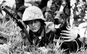 War Dogs  US Marine Corps: WWII. Pacific Theater, Combat-contact.