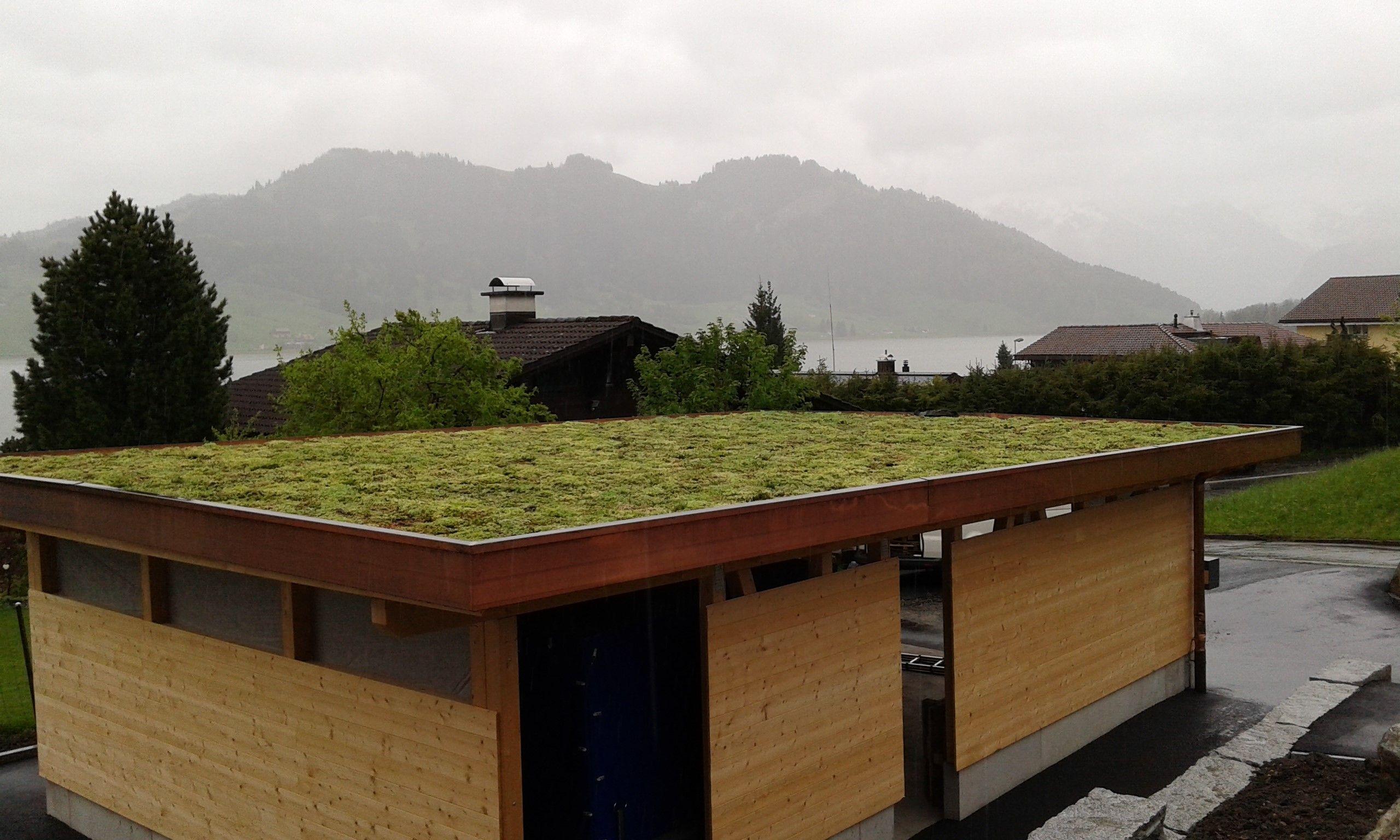 Dachbegrünung (mit Bildern) Dachbegrünung, Dach, Carport