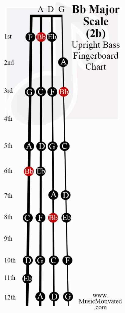 B flat major scale upright double bass fingerboard notes chart Bb